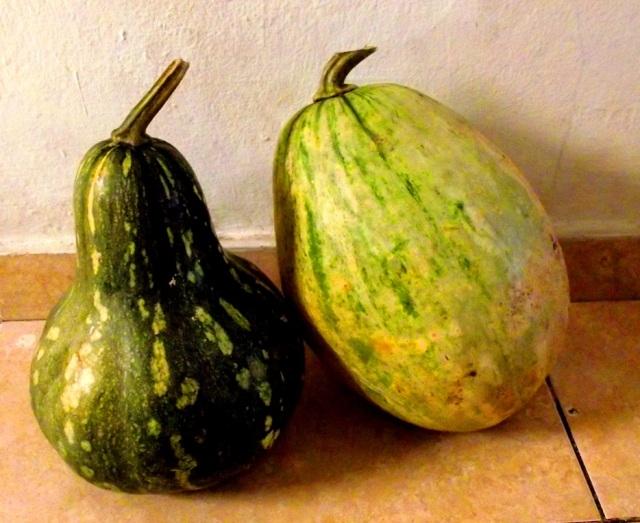 Dominican squash